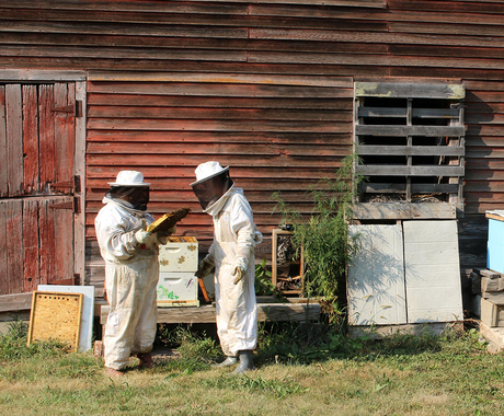 Two beekeepers looking at hive