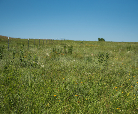 Conservation practices in field