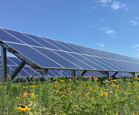 pollinator-friendly solar field