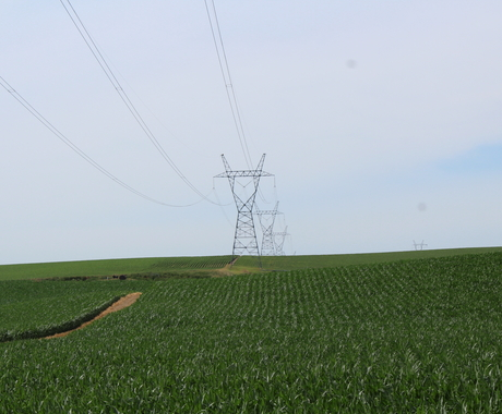 Transmission line in cornfield