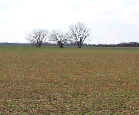 Field with cover crops
