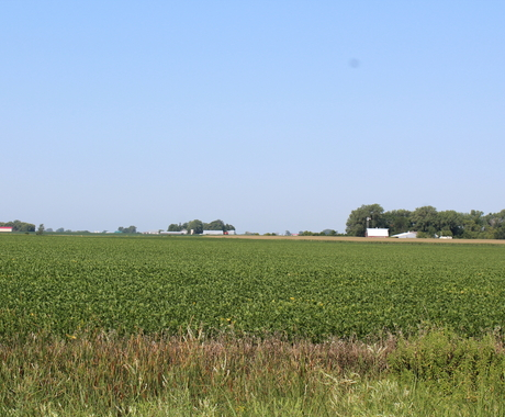 Field with farm places in the background