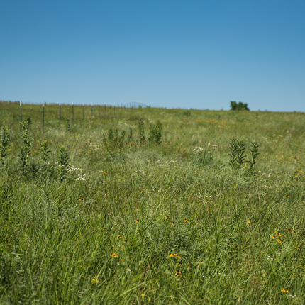Field with conservation practices