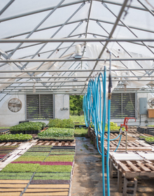 Hoop house with vegetables growing inside
