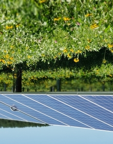 Solar panels with native vegetation